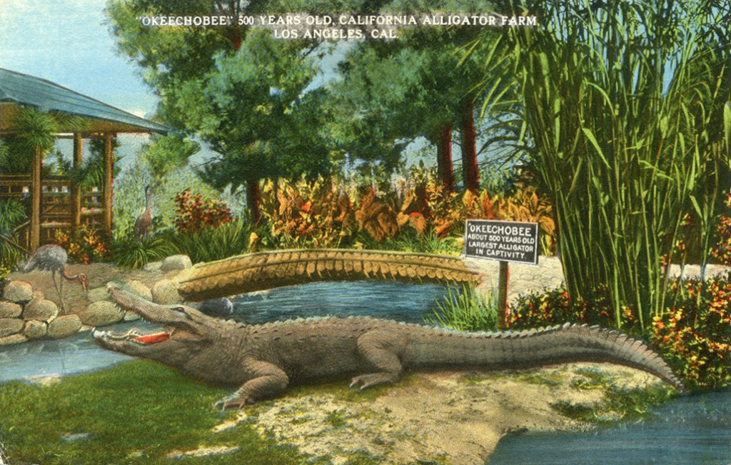 Okeechobee_500_Years_Old_California_Alligator_Farm_Los_Angeles_Cal