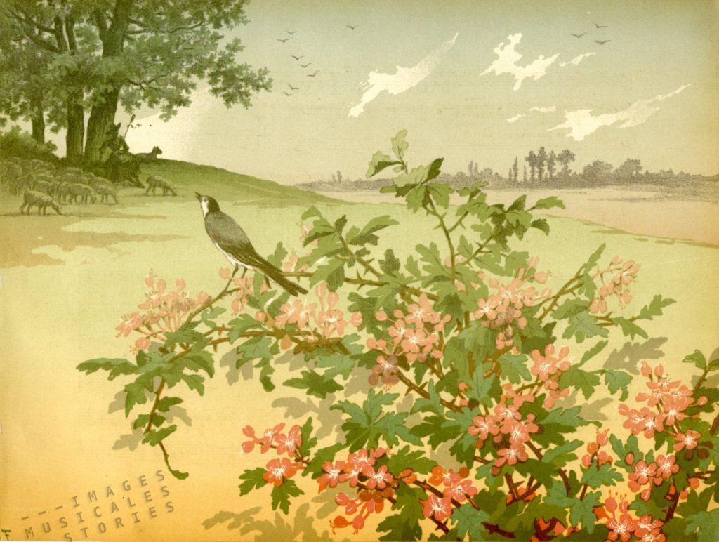 l'Oiseau Favori by G. Fraipont